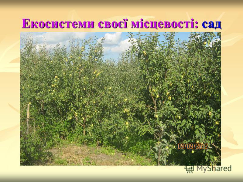 Екосистеми своєї місцевості: сад