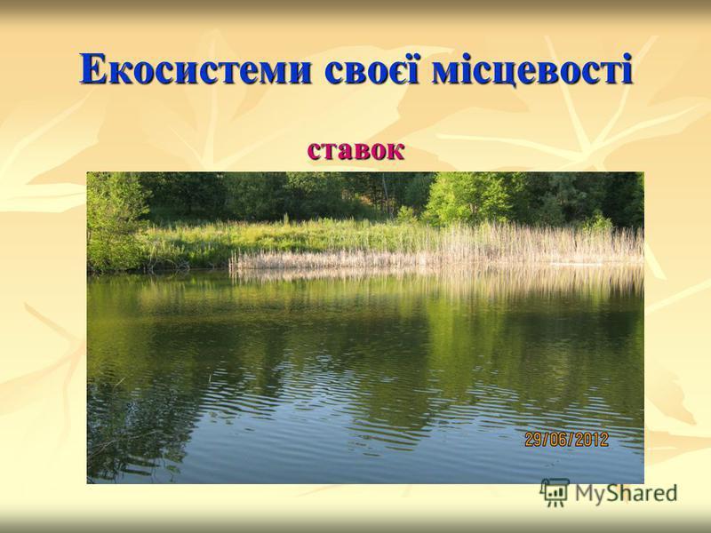 Екосистеми своєї місцевості ставок