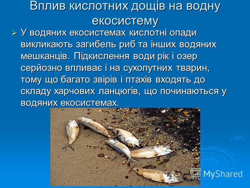 Вплив кислотних дощів на водну екосистему У водяних екосистемах кислотні опади викликають загибель риб та інших водяних мешканців. Підкислення води рік і озер серйозно впливає і на сухопутних тварин, тому що багато звірів і птахів входять до складу х