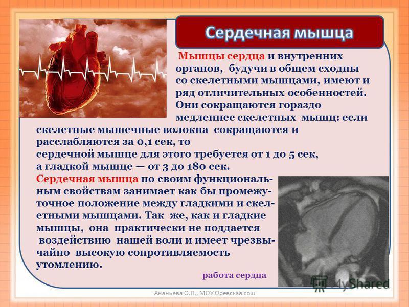 Мышцы сердца и внутренних органов, будучи в общем сходны со скелетными мышцами, имеют и ряд отличительных особенностей. Они сокращаются гораздо медленнее скелетных мышц: если скелетные мышечные волокна сокращаются и расслабляются за 0,1 сек, то серде