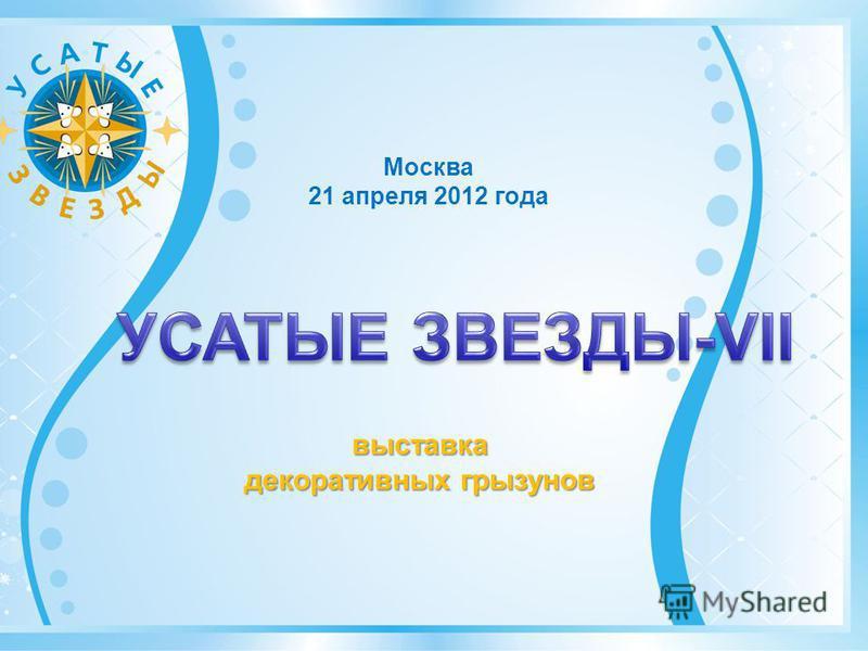 Москва 21 апреля 2012 года выставка декоративных грызунов