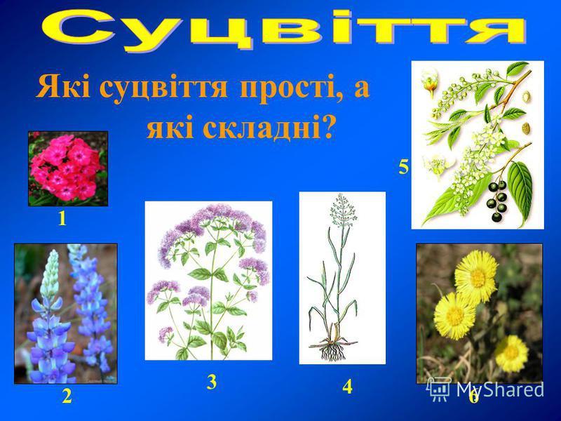 Які суцвіття прості, а які складні? 1 2 3 4 5 6