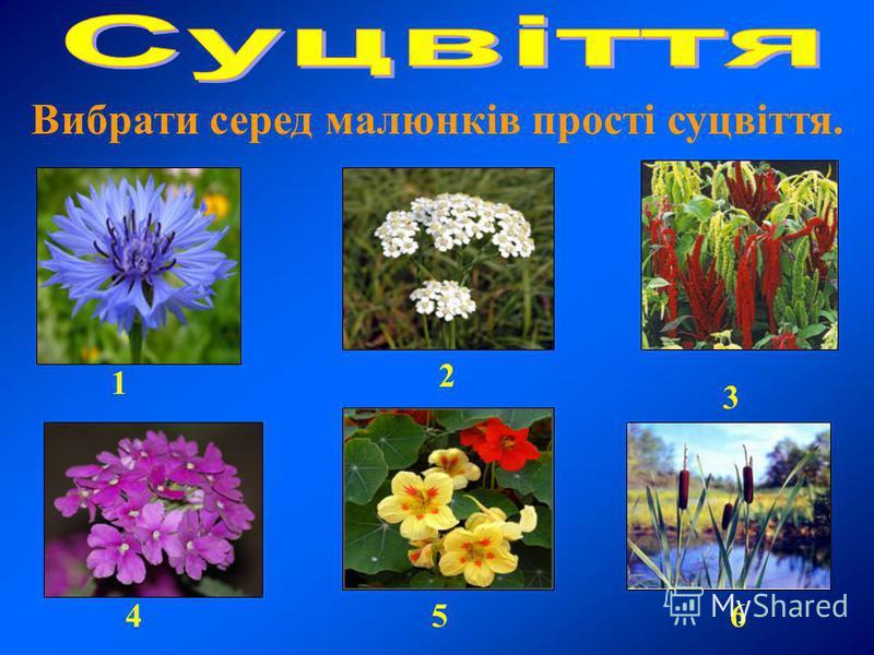 Вибрати серед малюнків прості суцвіття. 6 3 1 2 45