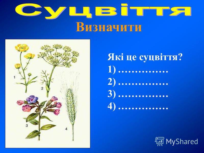 Які це суцвіття? 1)…………… 2)…………… 3)…………… 4)…………… Визначити