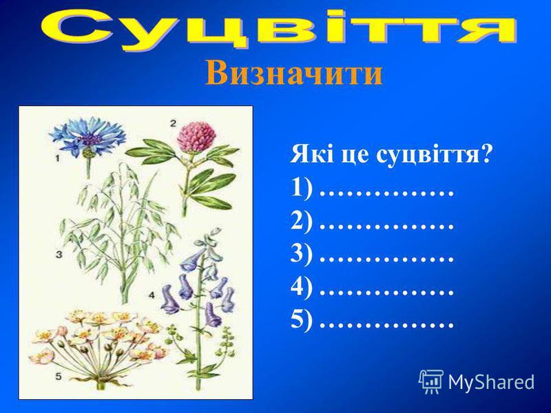 Які це суцвіття? 1)…………… 2)…………… 3)…………… 4)…………… 5)……………