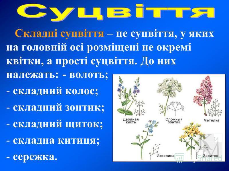Складні суцвіття – це суцвіття, у яких на головній осі розміщені не окремі квітки, а прості суцвіття. До них належать: - волоть; - складний колос; - складний зонтик; - складний щиток; - складна китиця; - сережка.