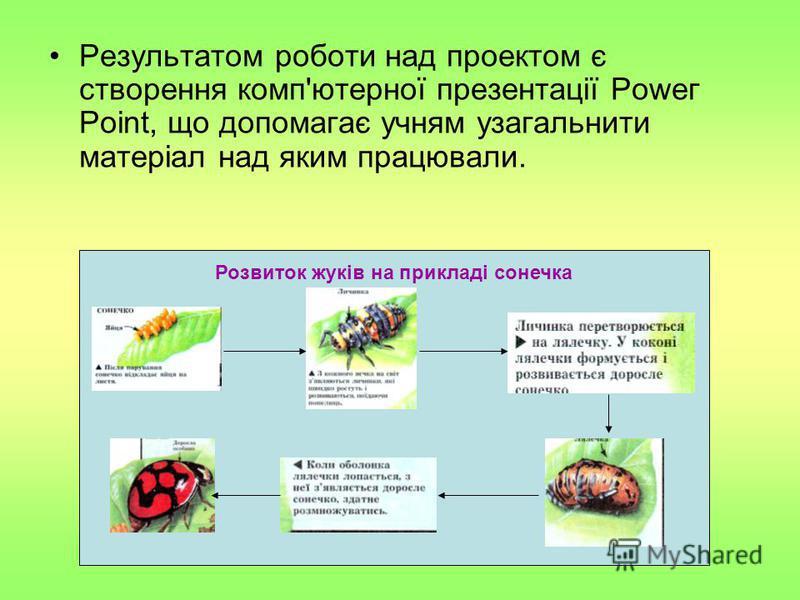 Результатом роботи над проектом є створення комп'ютерної презентації Роwег Роіnt, що допомагає учням узагальнити матеріал над яким працювали. Розвиток жуків на прикладі сонечка