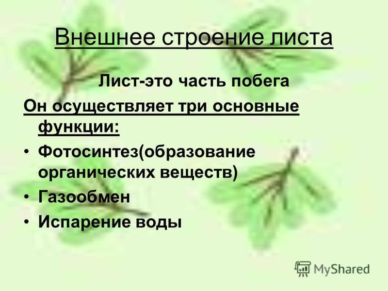 Внешнее строение листа Лист-это часть побега Он осуществляет три основные функции: Фотосинтез(образование органических веществ) Газообмен Испарение воды