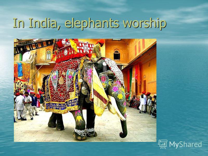 In India, elephants worship Картинка с сайта 20 из 11800 Вернуться к результатам поиска Вернуться к результатам поиска
