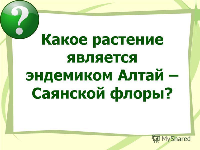 Какое растение является эндемиком Алтай – Саянской флоры?