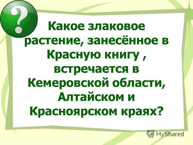 Какое злаковое растение, занесённое в Красную книгу, встречается в Кемеровской области, Алтайском и Красноярском краях?