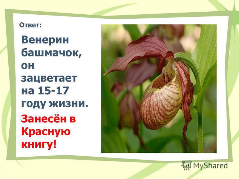 Ответ: Венерин башмачок, он зацветает на 15-17 году жизни. Занесён в Красную книгу!