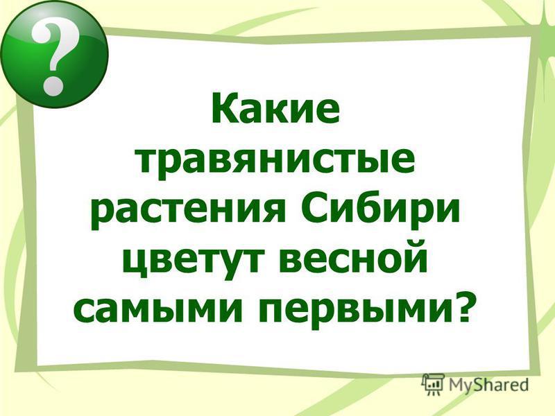 Какие травянистые растения Сибири цветут весной самыми первыми?