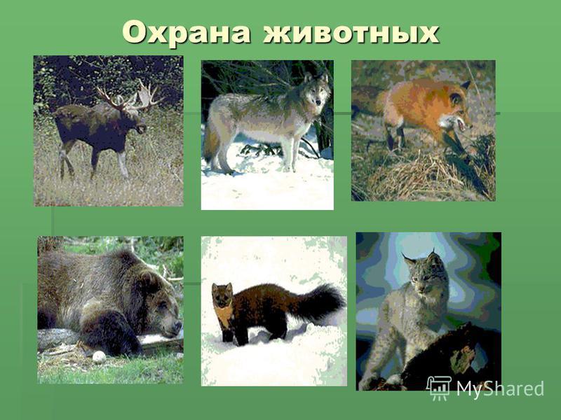 Охрана животных