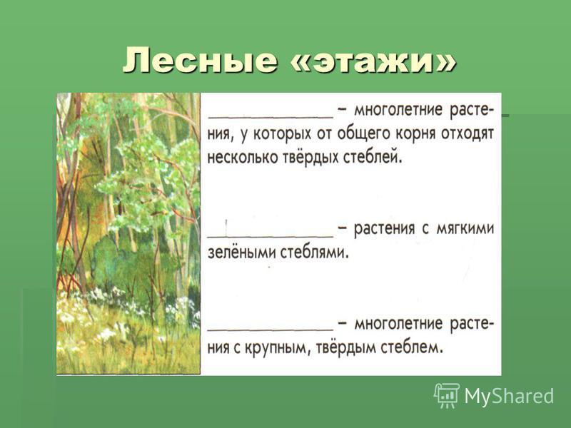 Лесные «этажи»