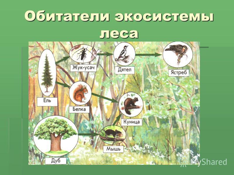 Обитатели экосистемы леса