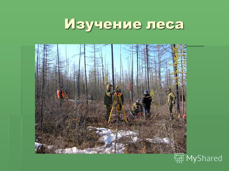 Изучение леса