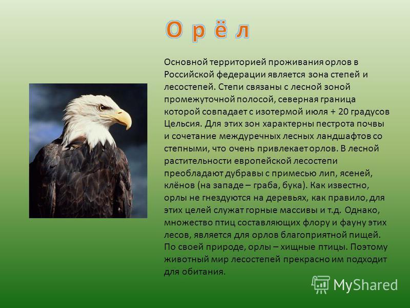 Основной территорией проживания орлов в Российской федерации является зона степей и лесостепей. Степи связаны с лесной зоной промежуточной полосой, северная граница которой совпадает с изотермой июля + 20 градусов Цельсия. Для этих зон характерны пес