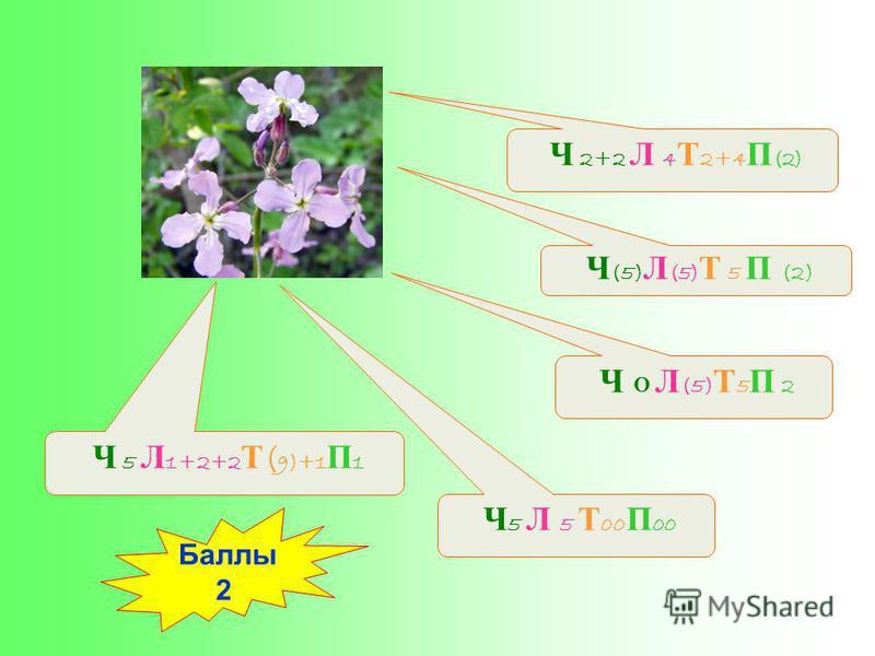 Ч (5) Л (5) Т 5 П (2) Ч 5 Л 5 Т 00 П 00 Ч 5 Л 1+2+2 Т ( 9)+1 П 1 Ч О Л (5) Т 5 П 2 Ч 2+2 Л 4 Т 2+4 П (2) Баллы 2