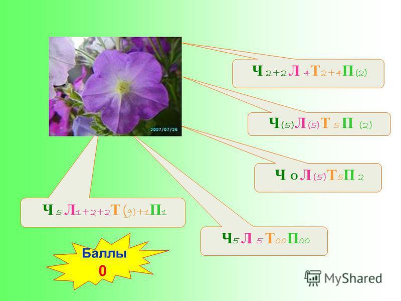 Ч (5) Л (5) Т 5 П (2) Ч 5 Л 5 Т 00 П 00 Ч 5 Л 1+2+2 Т ( 9)+1 П 1 Ч О Л (5) Т 5 П 2 Ч 2+2 Л 4 Т 2+4 П (2) Баллы 0