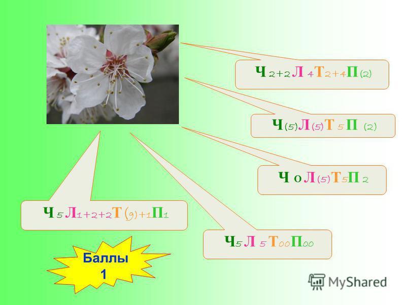 Ч (5) Л (5) Т 5 П (2) Ч 5 Л 5 Т 00 П 00 Ч 5 Л 1+2+2 Т ( 9)+1 П 1 Ч О Л (5) Т 5 П 2 Ч 2+2 Л 4 Т 2+4 П (2) Баллы 1