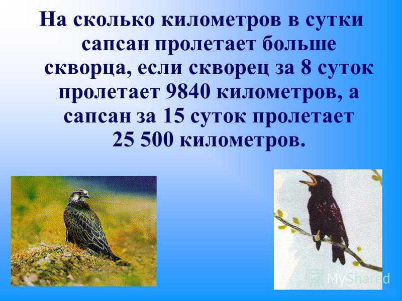 На сколько километров в сутки сапсан пролетает больше скворца, если скворец за 8 суток пролетает 9840 километров, а сапсан за 15 суток пролетает 25 500 километров.