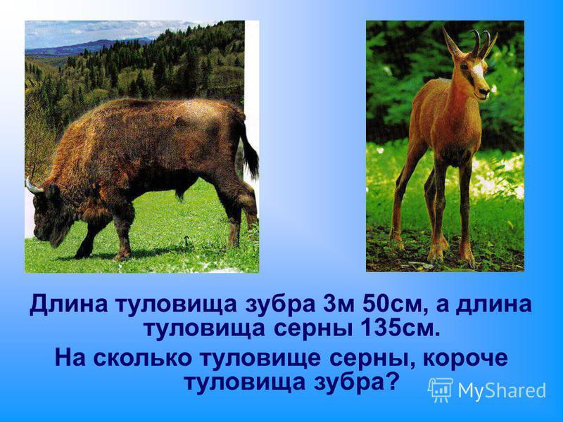 Длина туловища зубра 3 м 50 см, а длина туловища серны 135 см. На сколько туловище серны, короче туловища зубра?