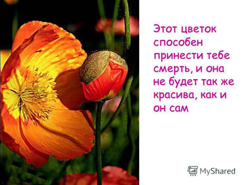 Этот цветок способен принести тебе смерть, и она не будет так же красива, как и он сам