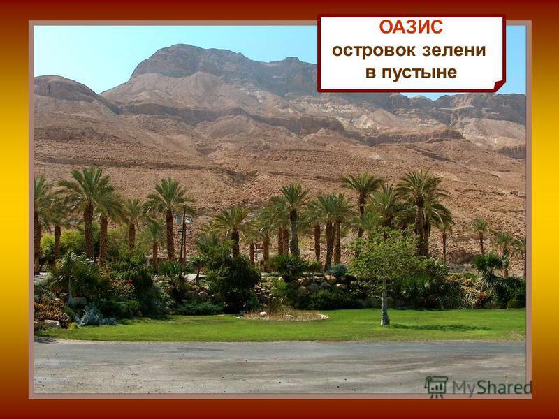 ОАЗИС островок зелени в пустыне
