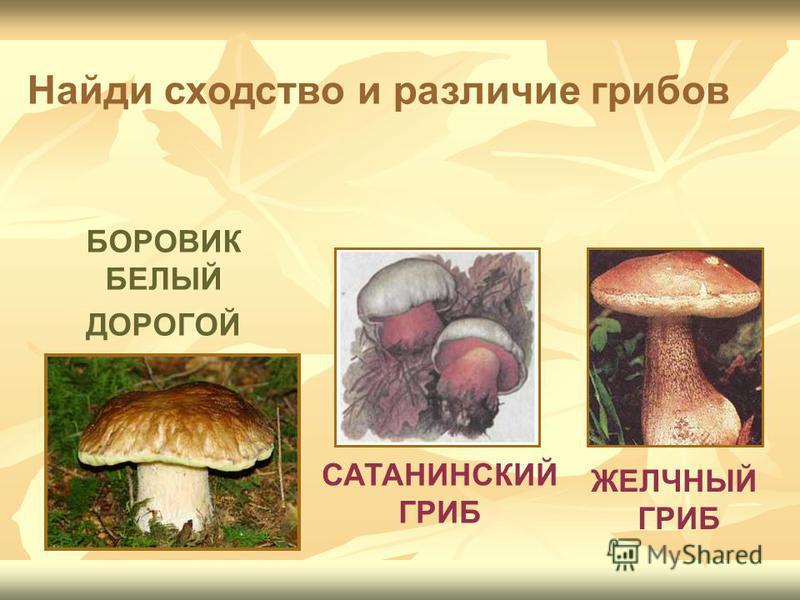 БОРОВИК БЕЛЫЙ ДОРОГОЙ САТАНИНСКИЙ ГРИБ ЖЕЛЧНЫЙ ГРИБ Найди сходство и различие грибов