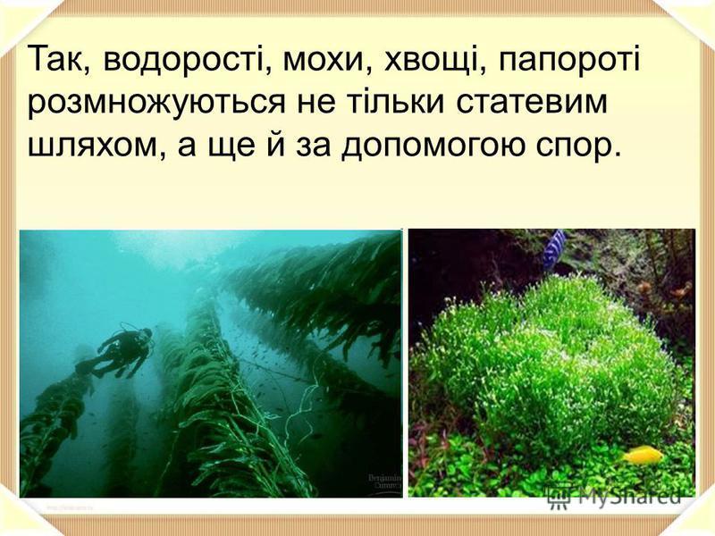 Так, водорості, мохи, хвощі, папороті розмножуються не тільки статевим шляхом, а ще й за допомогою спор.