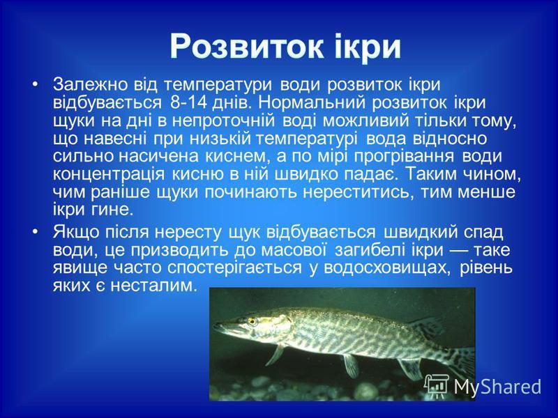 Залежно від температури води розвиток ікри відбувається 8-14 днів. Нормальний розвиток ікри щуки на дні в непроточній воді можливий тільки тому, що навесні при низькій температурі вода відносно сильно насичена киснем, а по мірі прогрівання води конце