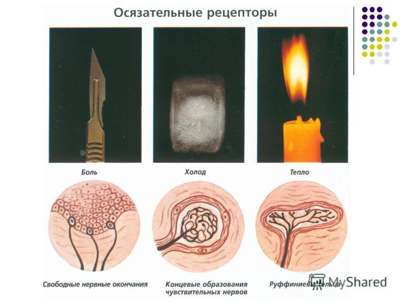 Комягина Т.В. МОУ СОШ 7 г.Кировска