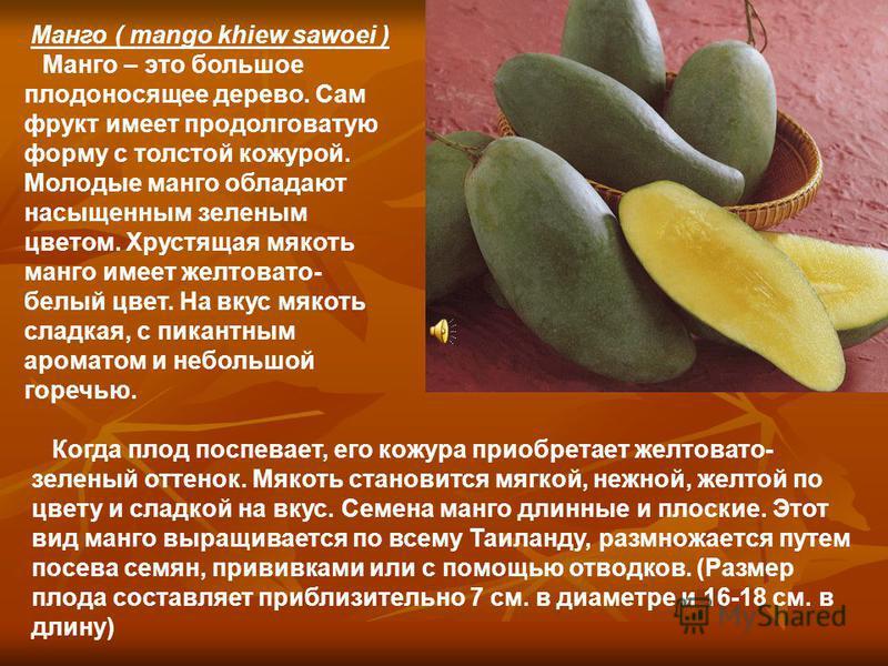 Манго ( mango khiew sawoei ) Манго – это большое плодоносящее дерево. Сам фрукт имеет продолговатую форму с толстой кожурой. Молодые манго обладают насыщенным зеленым цветом. Хрустящая мякоть манго имеет желтовато- белый цвет. На вкус мякоть сладкая,