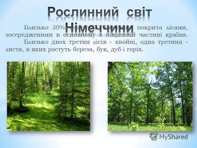 Близько 30% території Німеччини покрита лісами, зосередженими в основному в південній частині країни. Близько двох третин лісів - хвойні, одна третина - листя, в яких ростуть береза, бук, дуб і горіх.