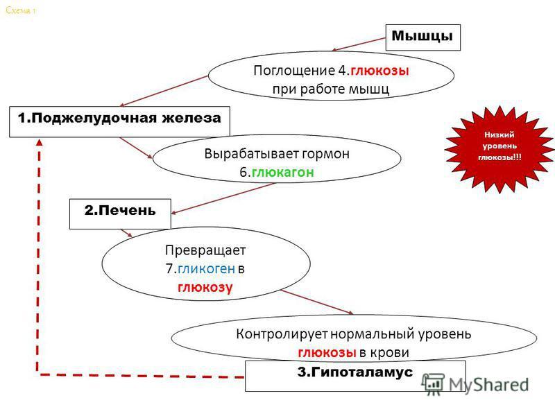 Мышцы Поглощение 4.________ при работе мышц 1. Поджелудочная железа Вырабатывает гормон 6.__________ 2. Печень Превращает 7.___________ в глюкозу 3. Гипоталамус Контролирует нормальный уровень глюкозы в крови Низкий уровень глюкозы!!! Схема 1 Поглоще