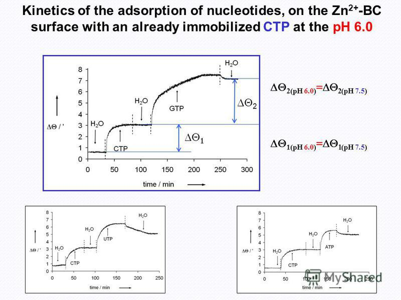 Kinetics of the adsorption of nucleotides, on the Zn 2+ -BC surface with an already immobilized CTP at the pH 6.0 2 1(pH 6.0) = (pH 7.5) 2(pH 6.0) = 2(pH 7.5)