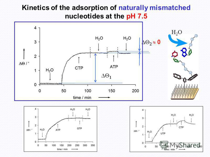 H2OH2O Kinetics of the adsorption of naturally mismatched nucleotides at the pH 7.5 2 0