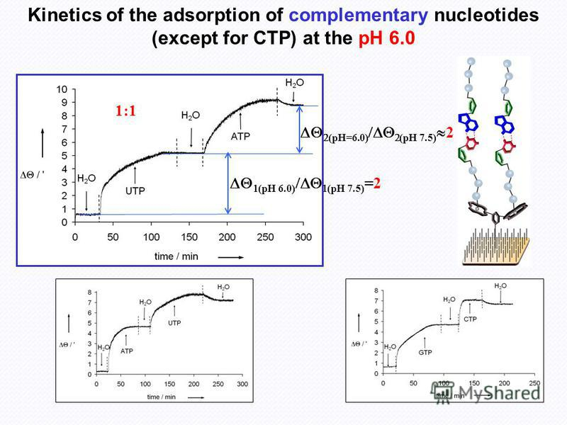Kinetics of the adsorption of complementary nucleotides (except for CTP) at the pH 6.0 (pH 6.0) (pH 7.5) =2 (pH=6.0) (pH 7.5) 2 1:1