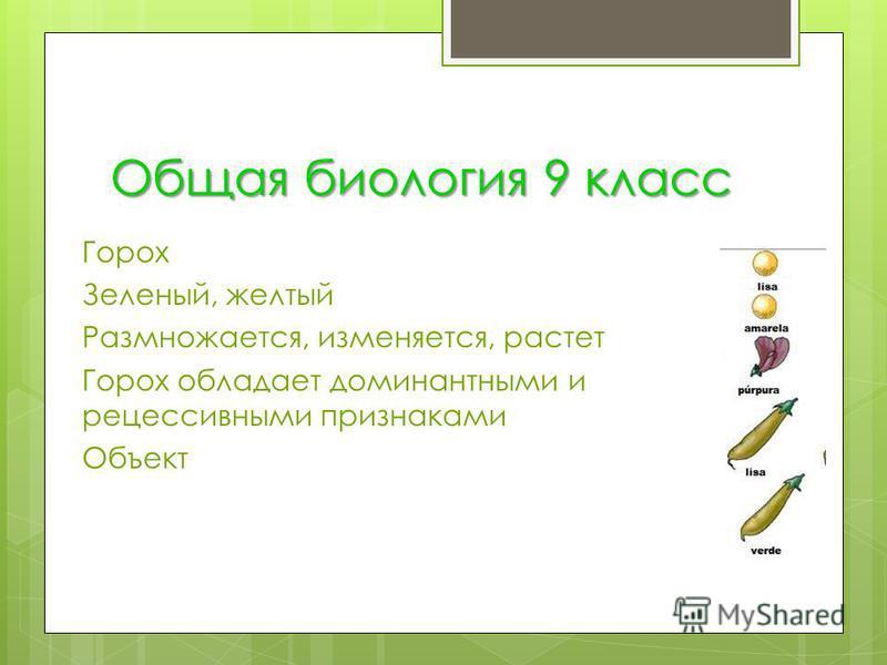 Общая биология 9 класс Горох Зеленый, желтый Размножается, изменяется, растет Горох обладает доминантными и рецессивными признаками Объект