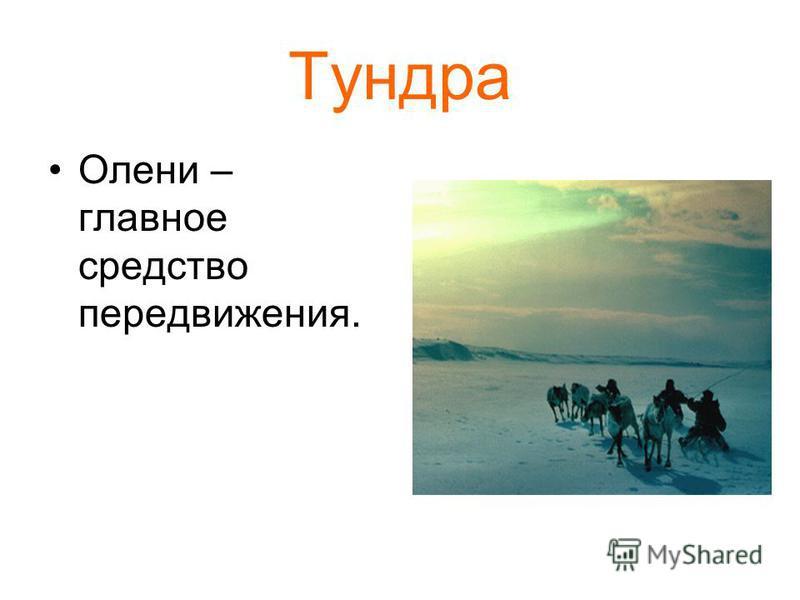 Тундра Олени – главное средство передвижения.