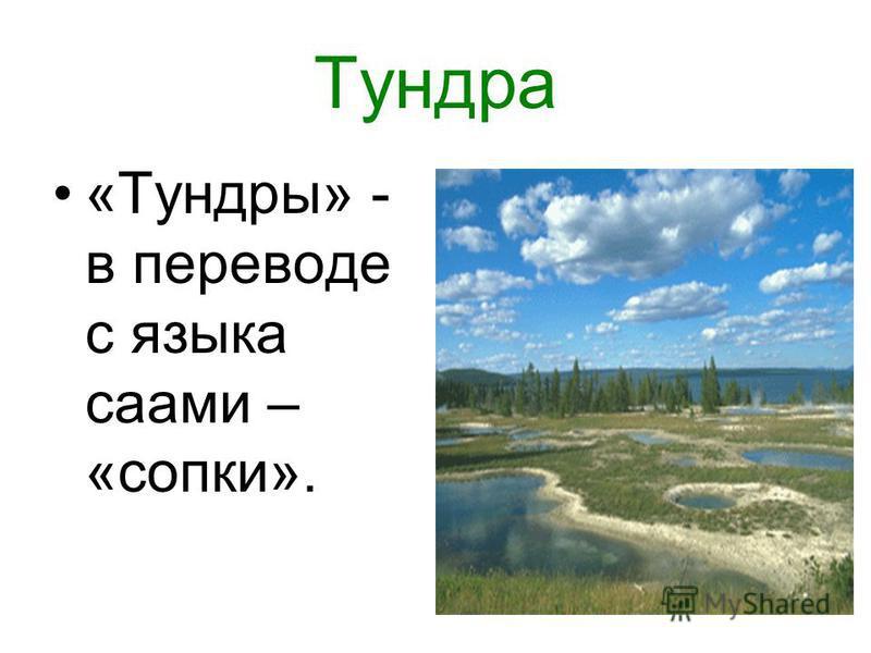Тундра «Тундры» - в переводе с языка саами – «сопки».