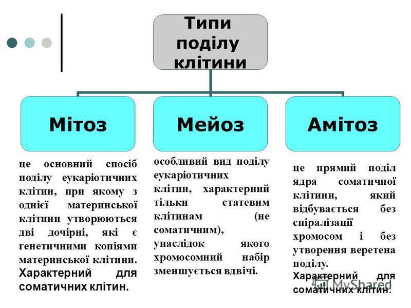 Типи поділу клітини МітозМейозАмітоз це основний спосіб поділу еукаріотичних клітин, при якому з однієї материнської клітини утворюються дві дочірні, які є генетичними копіями материнської клітини. Характерний для соматичних клітин. це прямий поділ я