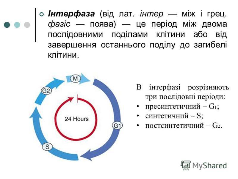 Інтерфаза (від лат. інтер між і грец. фазіс поява) це період між двома послідовними поділами клітини або від завершення останнього поділу до загибелі клітини. В інтерфазі розрізняють три послідовні періоди: пресинтетичний – G 1 ; синтетичний – S; пос