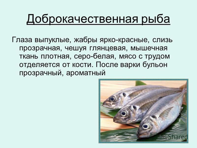Доброкачественная рыба Глаза выпуклые, жабры ярко-красные, слизь прозрачная, чешуя глянцевая, мышечная ткань плотная, серо-белая, мясо с трудом отделяется от кости. После варки бульон прозрачный, ароматный