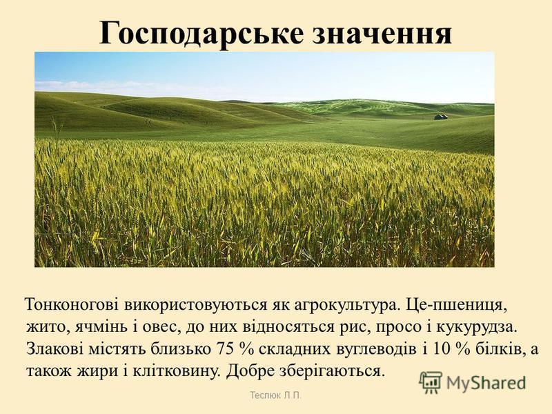 Плоди Теслюк Л.П. зернівка пшениці та жита ягодовидні з мясистим оплоднем бамбук горіховидні з твердим оплоднем