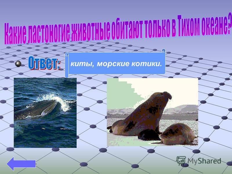 киты, морские котики.