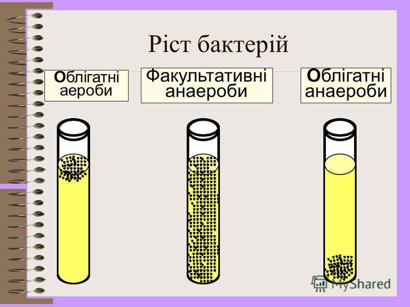Облігатні аероби (збудники туберкульозу, чуми, холери) Облігатні анаероби (збудники правця, ботулізму, газової анаеробної інфекції, бактероїди, фузобактерії) Факультативні анаероби (стафілококи, ешеріхії, сальмонели, шигели та інші) Мікроаерофіли (мо