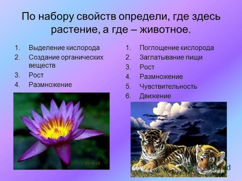 По набору свойств определи, где здесь растение, а где – животное. 1. Выделение кислорода 2. Создание органических веществ 3. Рост 4. Размножение 1. Поглощение кислорода 2. Заглатывание пищи 3. Рост 4. Размножение 5. Чувствительность 6.Движение