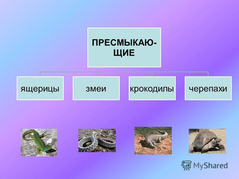 ПРЕСМЫКАЮ- ЩИЕ ящерицы змеи крокодилы черепахи